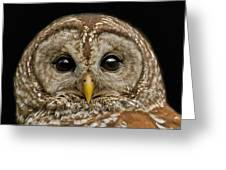 Barred Owl Fledgling Greeting Card by Larry Linton