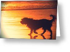 Beach Dog Greeting Card by Paul Topp