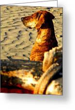 Beach Pooch By Michael Fitzpatrick Greeting Card by Olden Mexico