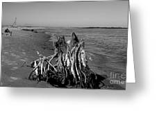 Beach Stump Greeting Card by Melody Jones