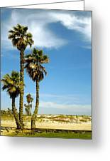 Beach View With Palms And Birds Greeting Card by Ben and Raisa Gertsberg