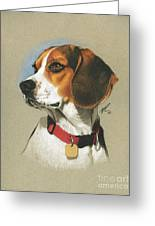 Beagle Greeting Card by Marshall Robinson