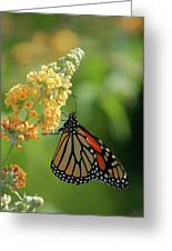 Beautiful Butterfly Greeting Card by Karol  Livote