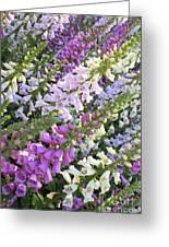 Beautiful Foxglove Greeting Card by Carol Groenen
