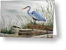 Beautiful Heron Shore Greeting Card by James Williamson