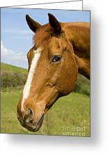 Beautiful Horse Portrait Greeting Card by Meirion Matthias