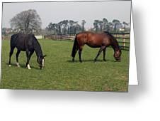 Beautiful Horses Greeting Card by John Quinn