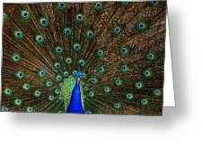 Beautiful Peacock Greeting Card by Larry Marshall