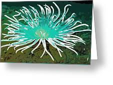Beautiful Sea Anemone 2 Greeting Card by Lanjee Chee