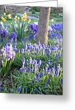 Beautiful Spring Day Greeting Card by Carol Groenen