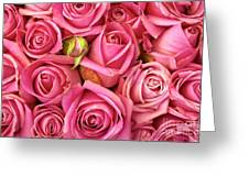 Bed Of Roses Greeting Card by Carlos Caetano