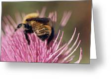 Bee On Thistle 102 Greeting Card by Diane Backs-Mancuso