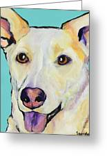 Bella Greeting Card by Pat Saunders-White