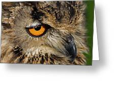Bengal Eagle Owl Greeting Card by JT Lewis