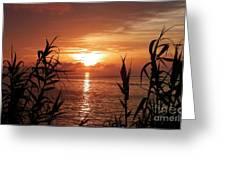 Bermuda Evening Greeting Card By Gina Sullivan