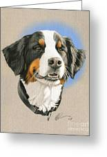 Bernese Mountain Dog Greeting Card by Marshall Robinson