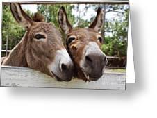 Best Buddies 2 Greeting Card by Wibada Photo