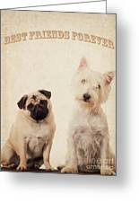 Best Friends Forever Greeting Card by Edward Fielding