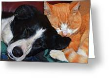 Best Friends Greeting Card by Susie Fisher