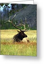 Big Bull 2 Greeting Card by Marty Koch