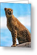 Big Cat Greeting Card by Diane E Berry