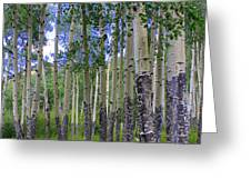 Birch Forest Greeting Card by Julie Lueders