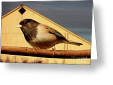 Bird House . 40D11078 Greeting Card by Wingsdomain Art and Photography