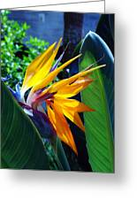 Bird Of Paradise Greeting Card by Susanne Van Hulst