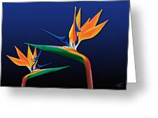 Birds Of Paradise Greeting Card by Kenneth Johnson