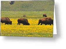 Bison Herd Greeting Card by Alan Lenk