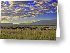 Bison On Antelope Flats Wy Greeting Card by Vijay Sharon Govender