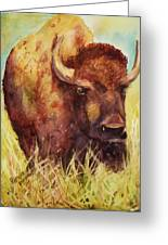 Bison Or Buffalo Greeting Card by Patricia Pushaw