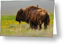 Bison With Cowbird On Back Greeting Card by Alan Lenk