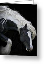Black And White Study V Greeting Card by Terry Kirkland Cook