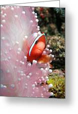 Black Anemone Fish Greeting Card by Georgette Douwma