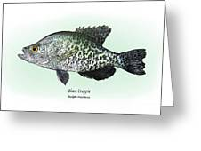 Black Crappie Greeting Card by Ralph Martens