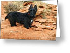 Black Dog Red Rock Greeting Card by Michele Penner