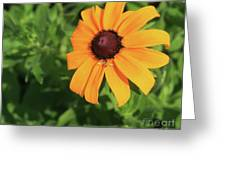 Black Eyed Susan 2 Greeting Card by Marjorie Imbeau