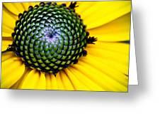 Black Eyed Susan Goldsturm Flower Greeting Card by Ryan Kelly