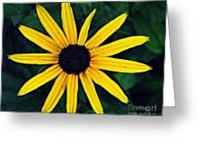 Black-eyed Susan Greeting Card by Sarah Loft