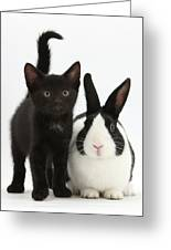 Black Kitten And Dutch Rabbit Greeting Card by Mark Taylor