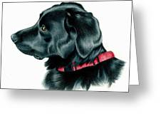 Black Lab With Red Collar Greeting Card by Heather Mitchell