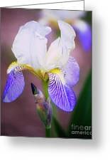 Blooming Iris Greeting Card by Shawn Bamberg