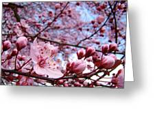 Blossoms Art Blue Sky Spring Tree Blossoms Pink Giclee Baslee Troutman Greeting Card by Baslee Troutman