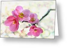 Blossoms Greeting Card by Marion Cullen