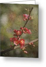 Blossoms Greeting Card by Rebecca Cozart