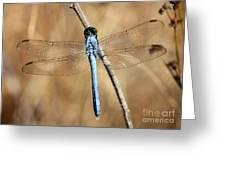 Blue Beauty Greeting Card by Carol Groenen