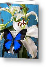 Blue Butterfly On White Tiger Lily Greeting Card by Garry Gay
