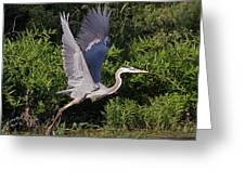 Blue Heron Greeting Card by Robert Pearson
