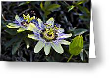 Blue Passion Flower Greeting Card by Kelley King